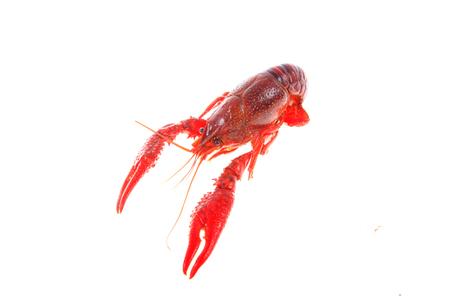 Close up view of crawfish on white background Stock Photo - 84863558