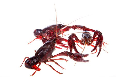 Close up view of crawfish on white background Stock Photo - 84863954