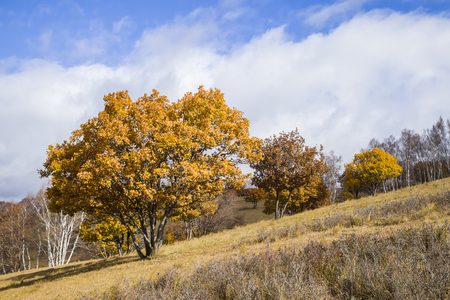 Trees on the hillside during autumn Stock Photo
