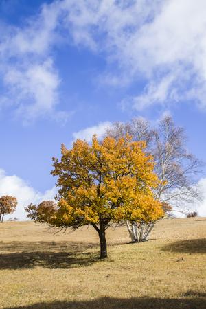Bäume am Hang im Herbst Standard-Bild - 87749534