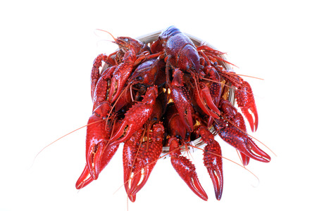 Crawfish on white background close up view