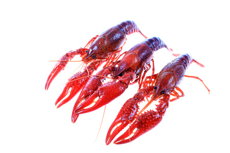 Crawfish on white background close-up view Stock Photo - 90667926