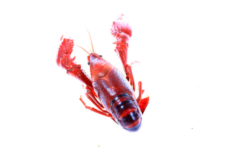 Crawfish on white background close-up view Stock Photo - 90756783