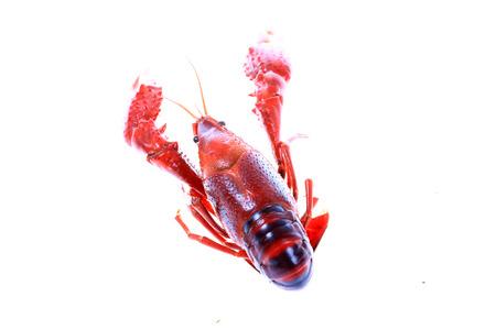 Crawfish on white background close-up view