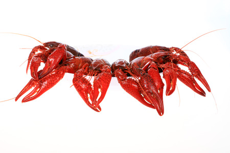 Crawfish on white background close-up view