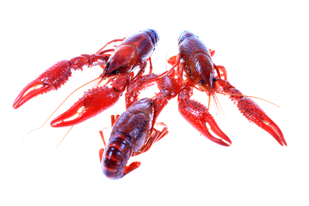 Crawfish on white background close-up view Stock Photo - 90757935