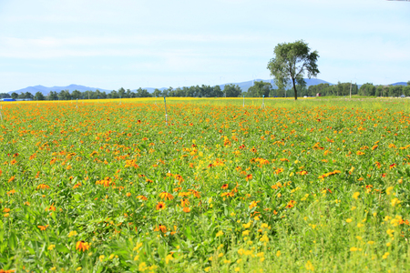 Daisy and gerbera in a field landscape view