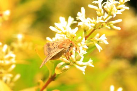 A moth, close-up Reklamní fotografie