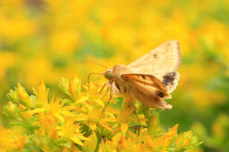 A moth, close-up Stock Photo