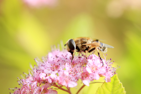 A bee on flower Stock Photo