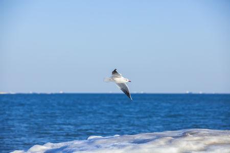 seagull flying above the sea Stock Photo