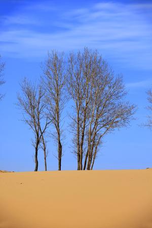 The trees in the desert