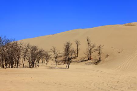 Desert scenery 版權商用圖片
