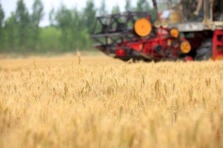 combine harvester working on a wheat field Фото со стока
