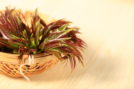 Leaves inside the basket