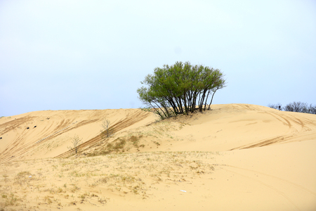Desert scenery is very beautiful Stock fotó
