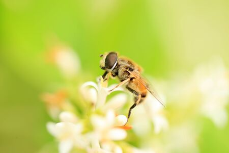 Honey bees on the flowers, close-up
