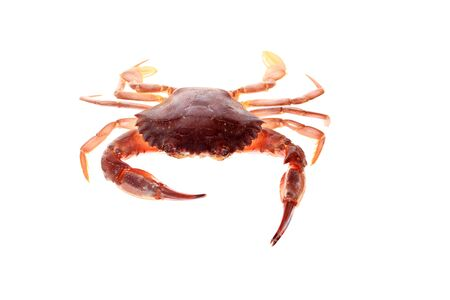 Crab isolated on white background. Fresh seafood. Stock Photo