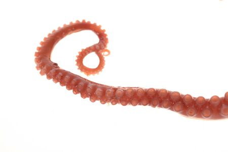 Octopus tentacles on a white background