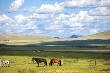 The horses grazed on the grassland