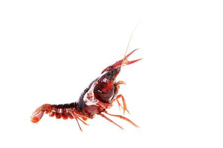 Crawfish, Crayfish on a white background
