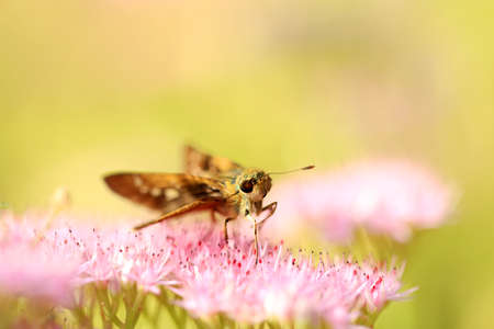 A butterfly is on the flower Stockfoto