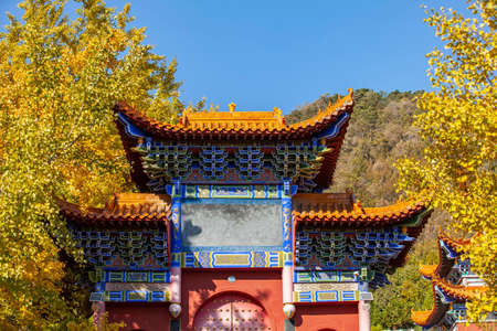Ancient Chinese architecture and ginkgo trees in autumn, close-up shot