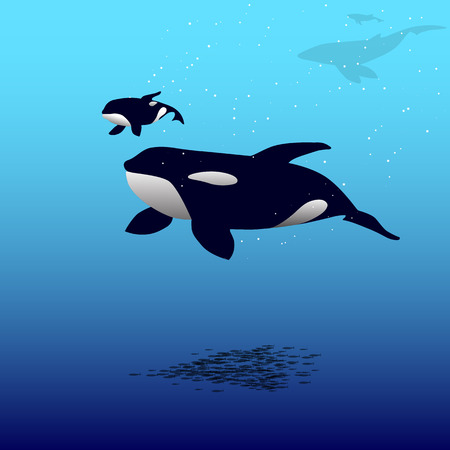 orcinus: Vector illustration of a killer whale and calf whales. Grampus. Orca whale.