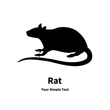 Vector image of a black rat. Isolated on white background. 矢量图像