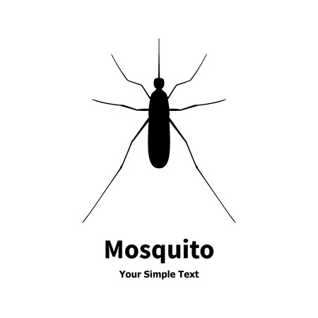 mozzie: Vector illustration of black mosquito. Isolated on white background. Midge, insect. Illustration