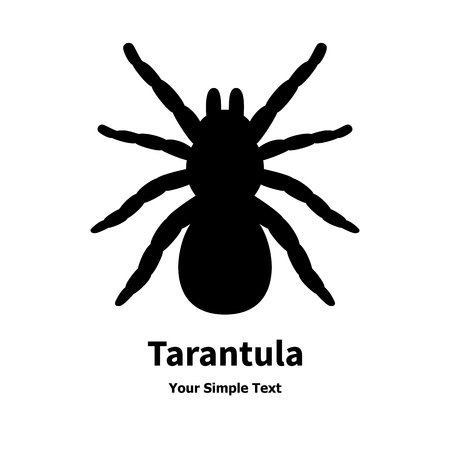 tarantula: Vector illustration of a black spider tarantula. Isolated silhouette on a white background.