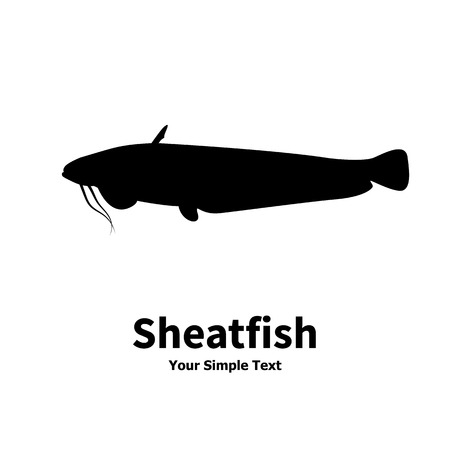 sheatfish: Vector illustration silhouette of fish catfish. Isolated sheatfish on a white background.