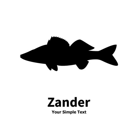 pikeperch: Vector illustration silhouette of zander. Isolated fish on a white background.