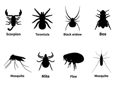 stinging: Vector illustration silhouettes of harmful stinging insects. Poisonous insects. The carrier of infection. Isolated on white background.