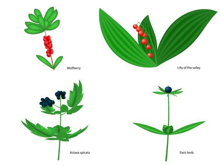 Vektor-Illustration von Wald giftigen Beeren mit Inschriften. Isoliert auf weißem Hintergrund. Vektorgrafik
