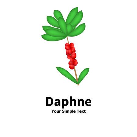 dafne: Illustrazione vettoriale di una pianta velenosa. Pianta con le bacche velenose Daphne. Isolato su sfondo bianco.