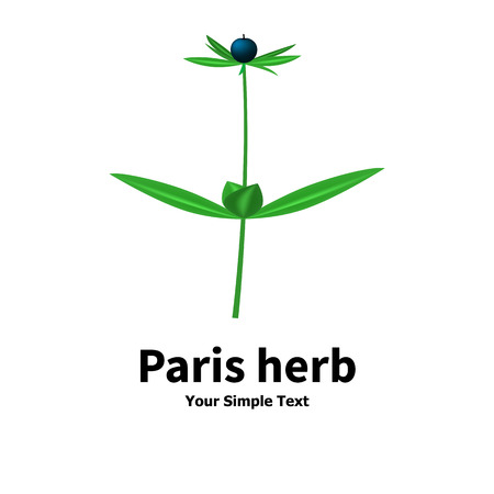 Vector illustration of a poisonous plant. Plant with poisonous berries Paris herb. Isolated on white background.