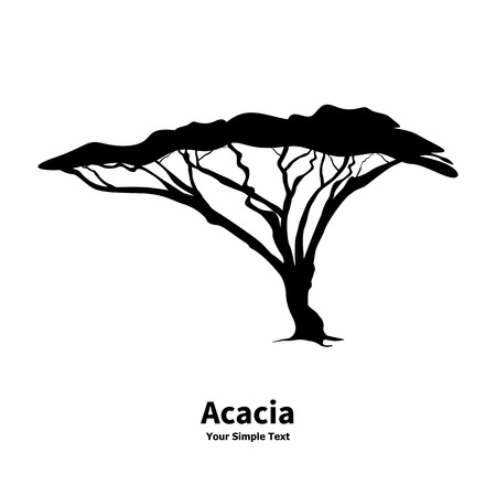 Vector illustration silhouette of an acacia tree. African wood isolated on white background. Illustration
