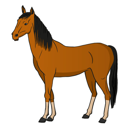 agriculturalist: Vector illustration horse isolated on a white background.