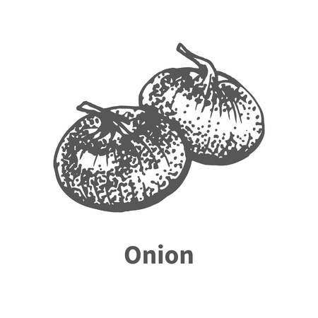onion isolated: Vector illustration doodle black and white hand-drawn onion. Isolated on white background. The concept of harvesting. Vintage style. Illustration