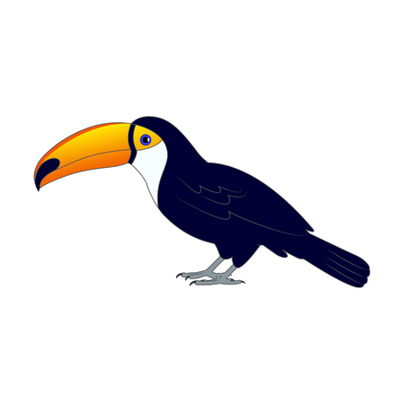 Vector illustration of a colorful toucan bird on the ground. On an isolated white background. Toucan side view profile.
