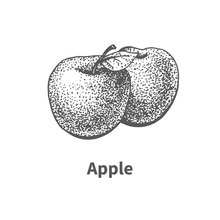 greengrocery: Vector illustration doodle black and white hand-drawn apple. Isolated on white background. The concept of harvesting. Vintage style. Fruit with the inscription.