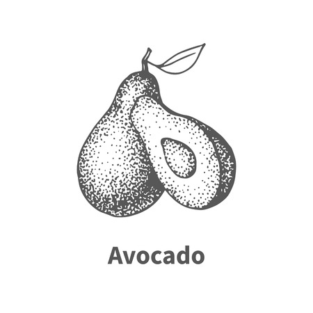 foetus: Vector illustration doodle black and white hand-drawn avocado. Isolated on white background. The concept of harvesting. Vintage style. Fruit with the inscription.
