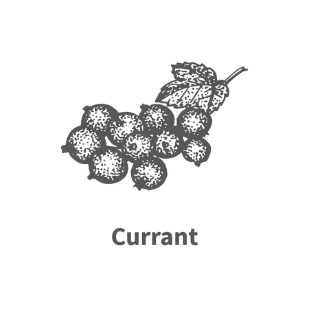 greengrocery: Vector illustration doodle black and white hand-drawn currant. Isolated on white background. The concept of harvesting. Vintage style. Fruit with the inscription.