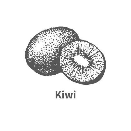 foetus: Vector illustration doodle black and white hand-drawn kiwi. Isolated on white background. The concept of harvesting. Vintage style. Fruit with the inscription. Illustration