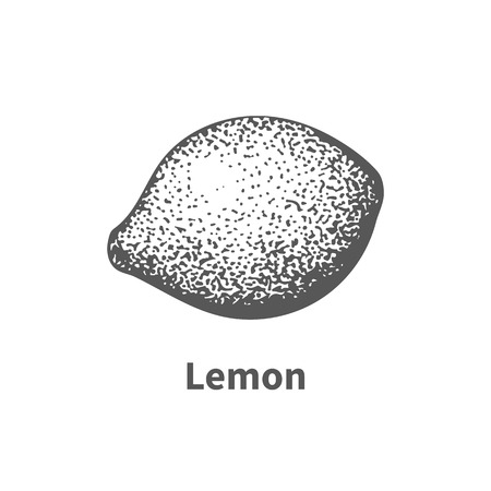 foetus: Vector illustration doodle black and white hand-drawn lemon. Isolated on white background. The concept of harvesting. Vintage style. Fruit with the inscription.