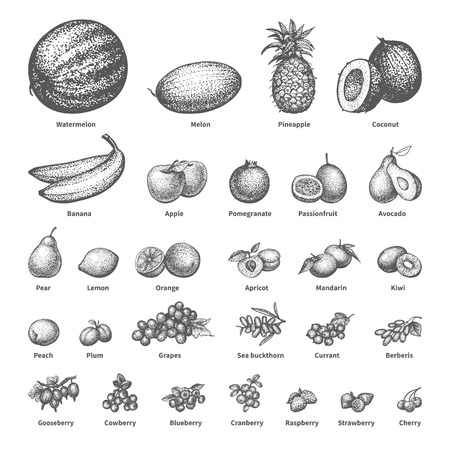 cowberry: Vector illustration sketch doodle hand-drawn set fruit with an inscription. Isolated white background. Background icons for grocery shopping. Collection of juicy fruits and berries. Dietary food.