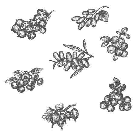 whortleberry: Vector illustration sketch doodle hand-drawn set different berries isolated on white background. Set of elements of berries for seamless pattern.
