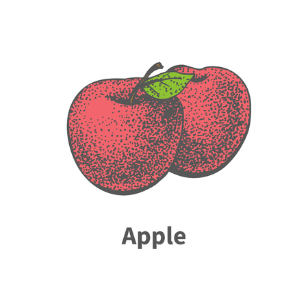 foetus: Vector illustration doodle sketch hand-drawn two ripe juicy red apple. Isolated on white background. The concept of harvesting. Vintage retro style. Illustration