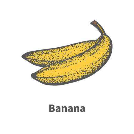 foetus: Vector illustration doodle sketch hand-drawn ripe yellow banana. Isolated on white background. The concept of harvesting. Vintage retro style.